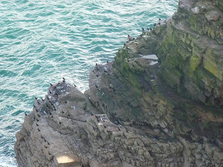 Cap Fréhel - réserve d'oiseaux